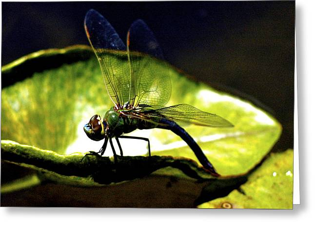 Pinao The Hawaiian Dragonfly Greeting Card