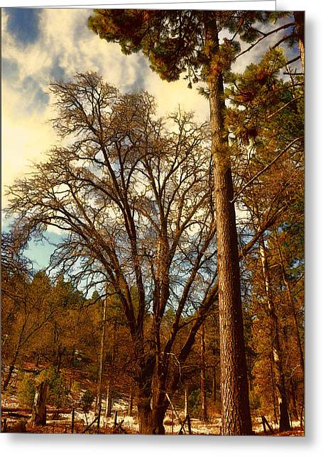 Pine And Oak Companions Greeting Card by Douglas MooreZart