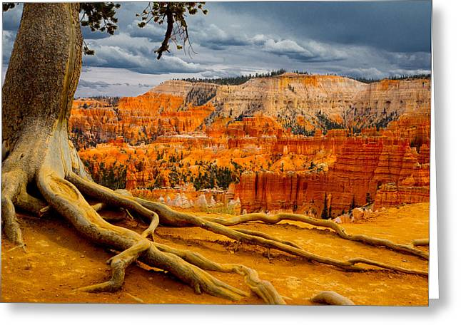 Pine At Bryce Greeting Card by Jim Snyder