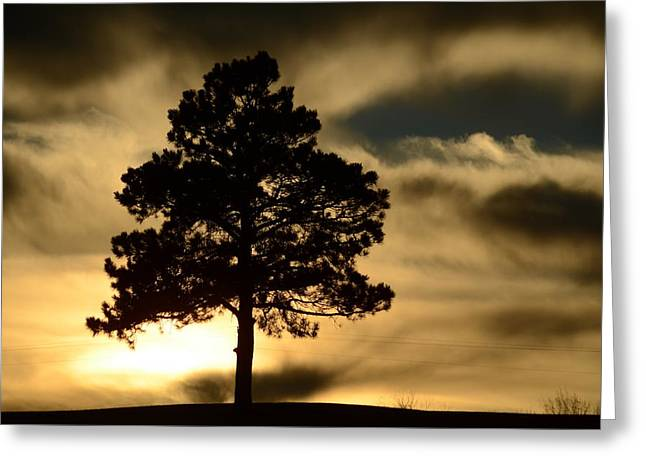 Pine At Sundown Greeting Card