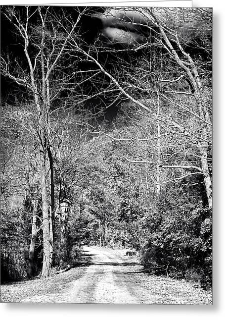 Pine Barrens Path Greeting Card by John Rizzuto