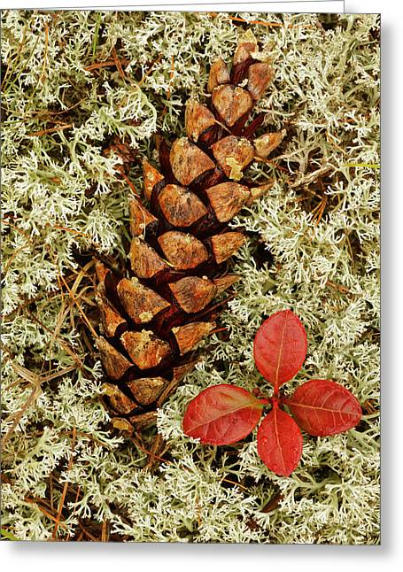 Pine Cone And Blueberry Foliage Among Greeting Card