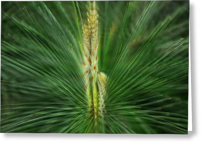 Pine Cone And Needles Greeting Card