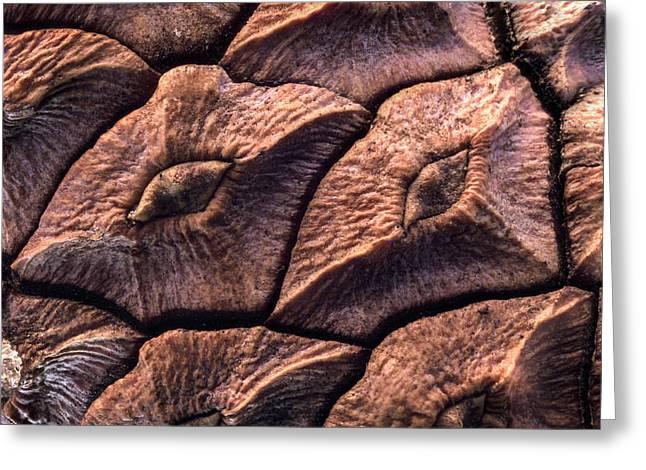 Pine Cone Closeup Greeting Card by Jean Noren