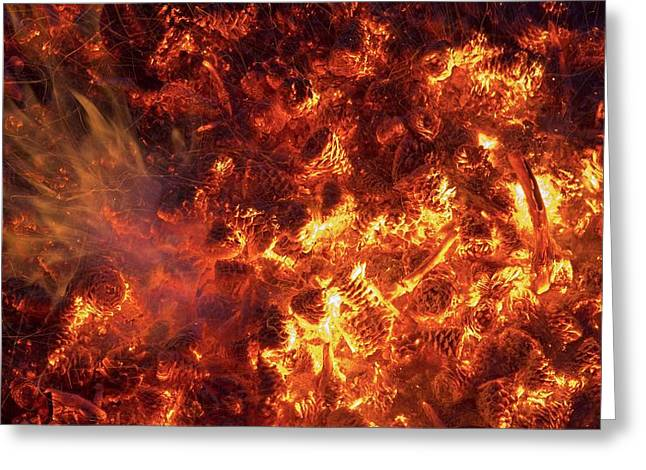 Pine Cones Burning In A Forest Fire Greeting Card