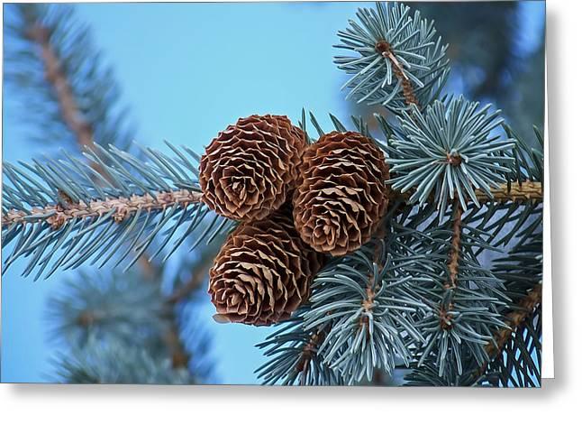 Pine Cones Greeting Card by Ernie Echols