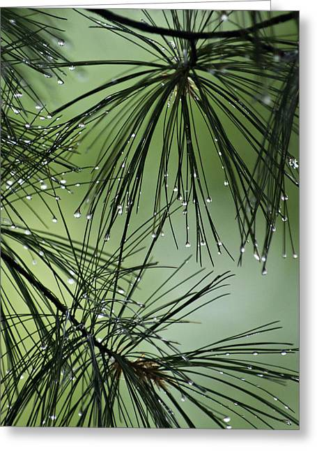 Pine Droplets Greeting Card by Judy  Johnson