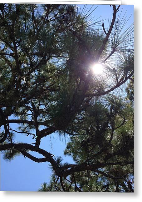 Pine Face With Sun Eye Greeting Card