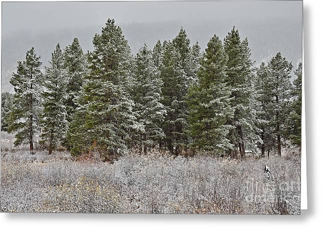 Pine Flurries Greeting Card