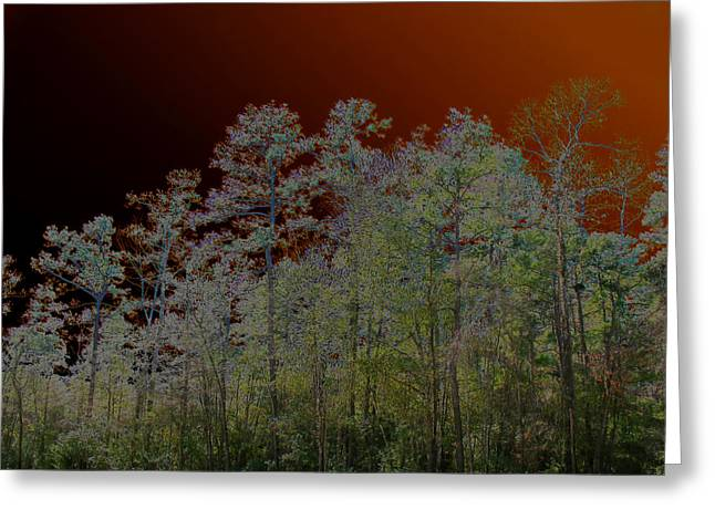 Pine Forest Greeting Card by Connie Fox