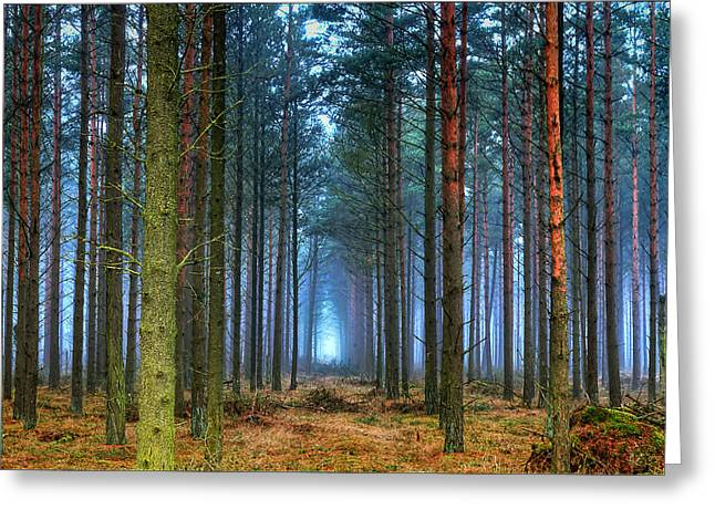 Pine Forest In Morning Fog Greeting Card by EXparte SE