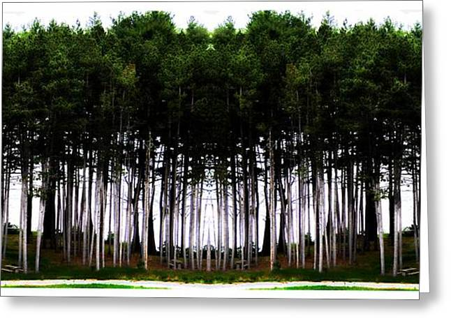 Pine Forest Greeting Card by Marcia Lee Jones
