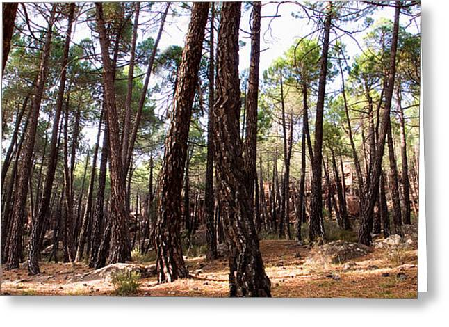 Pine Forest Greeting Card by Weston Westmoreland