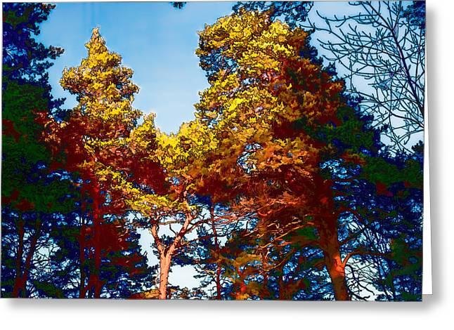 pine  Leif Sohlman Greeting Card by Leif Sohlman