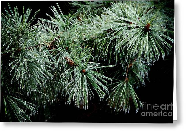 Pine Needles In Ice Greeting Card by Betty LaRue