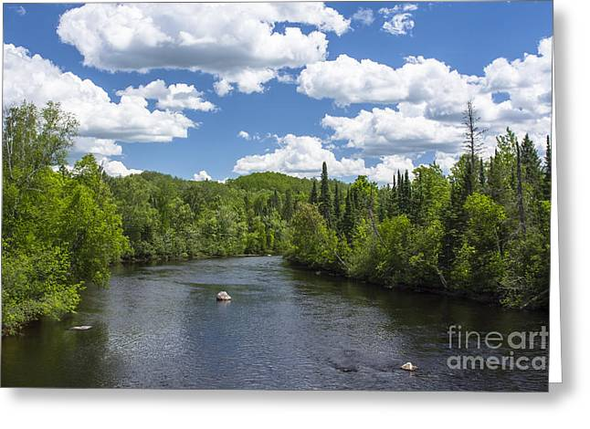 Pine River Greeting Card