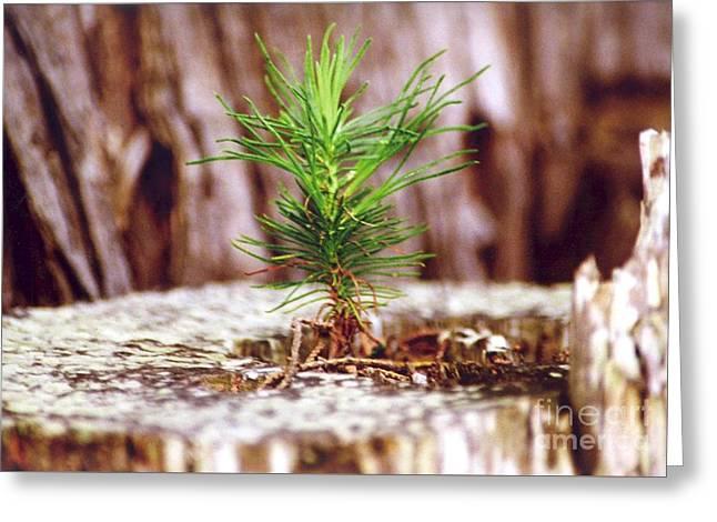 Pine Seedling Greeting Card