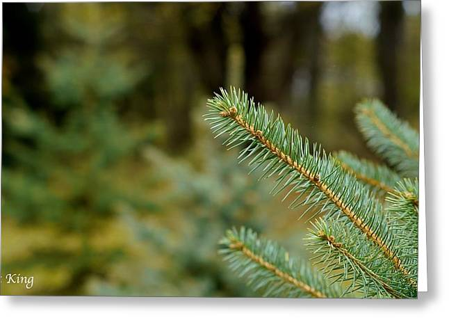 Pine Tree Greeting Card by Alex King