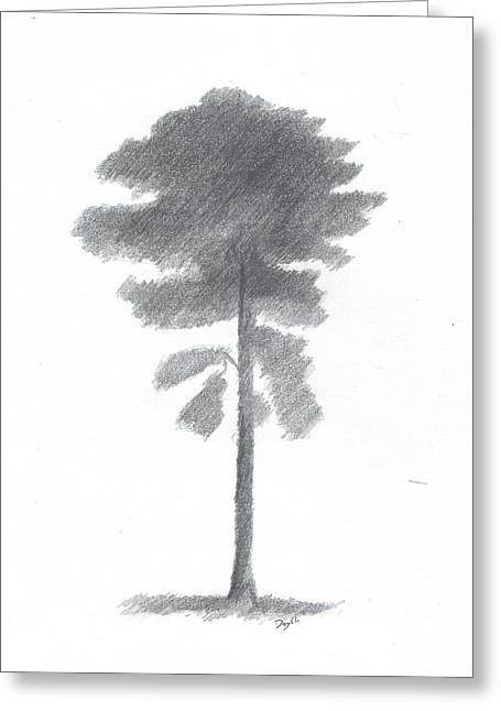 Pine Tree Drawing Number Four Greeting Card by Alan Daysh