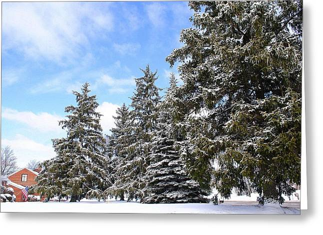 Pine Tree Haven Greeting Card by Frozen in Time Fine Art Photography