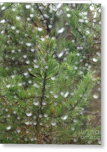 Pine Tree In The Rain Greeting Card