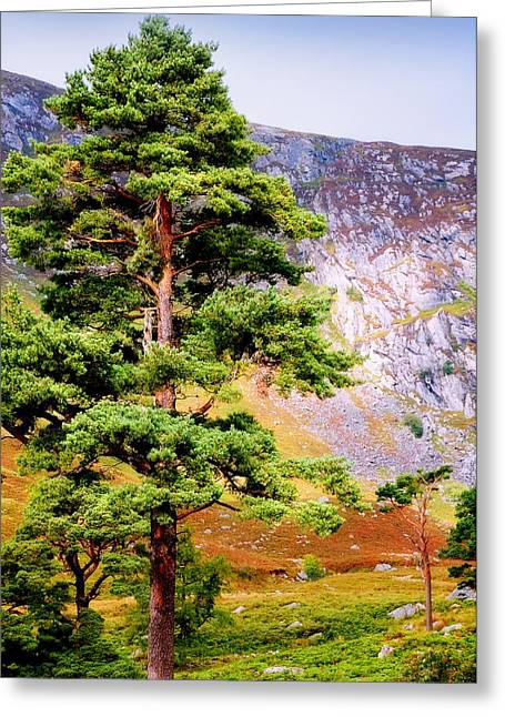 Pine Tree In Wicklow Hills. Ireland Greeting Card by Jenny Rainbow
