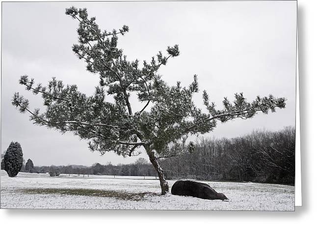 Pine Tree Greeting Card by Melinda Fawver