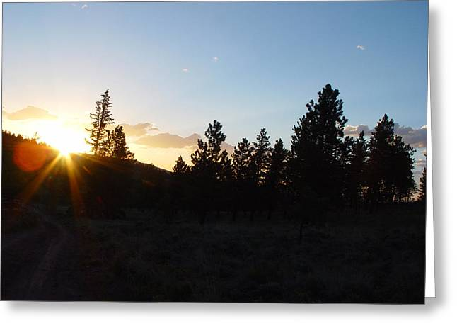 Pine Tree Sunset Greeting Card by Mark Russell