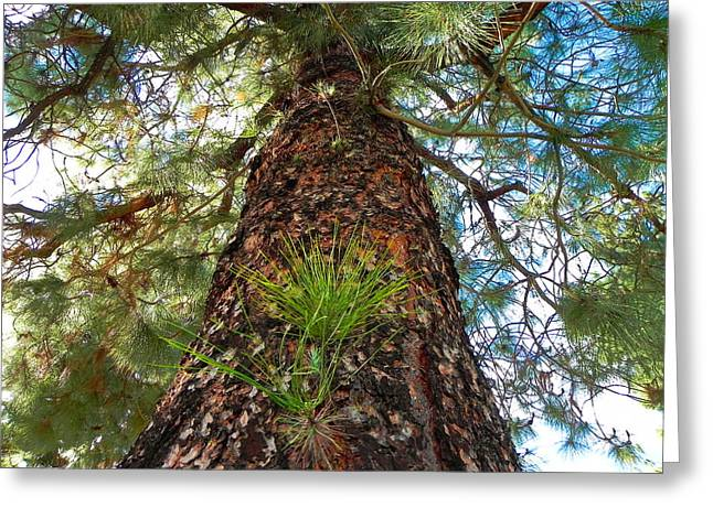 Pine Tree Tower Greeting Card