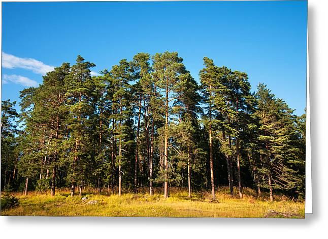 Pine Trees Of Valaam Island Greeting Card by Jenny Rainbow