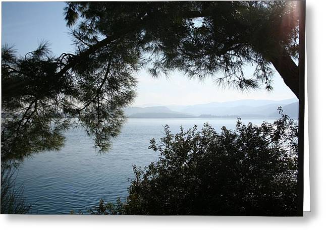 Greeting Card featuring the photograph Pine Trees Overhanging The Aegean Sea by Tracey Harrington-Simpson