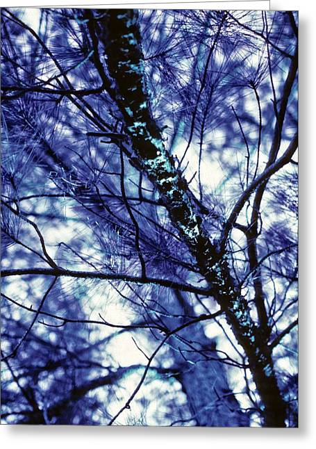 Pine Trees Redux In Blue Greeting Card