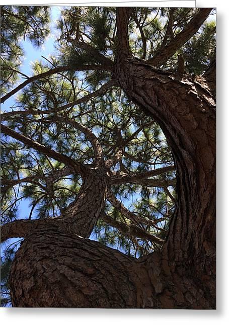 Pine Twist Greeting Card