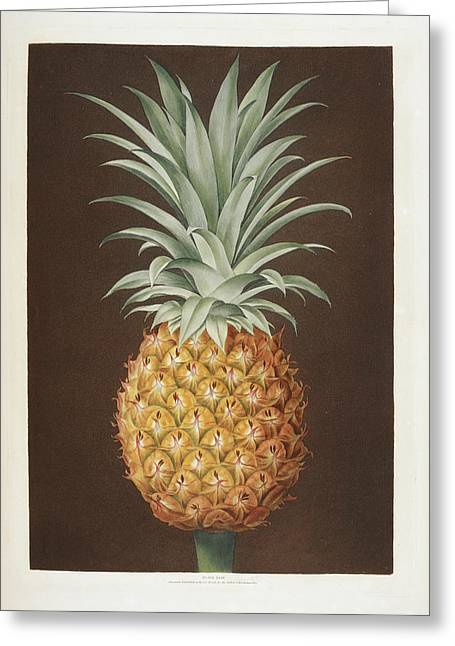 Pineapple Greeting Card by British Library