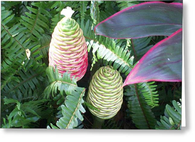 Greeting Card featuring the photograph Pineapple Ginger by Belinda Lee