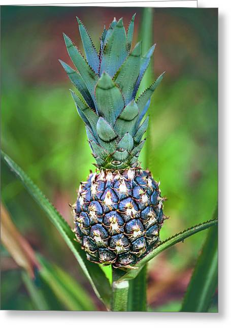 Pineapple Growing On Plant Greeting Card by Ktsdesign