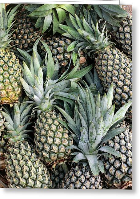 Pineapples (ananas Comosus) Greeting Card by Science Photo Library