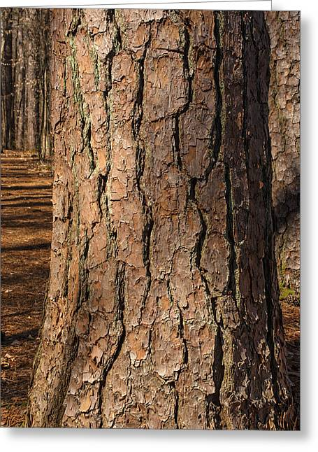 Pinebark Greeting Card