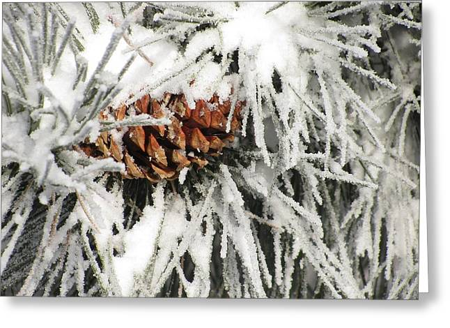 Pinecone In Snow Greeting Card by Steven Parker