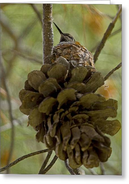Pinecone Nest Greeting Card