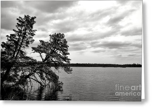 Pinelands Memories Greeting Card by Olivier Le Queinec