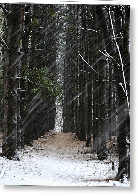 Pines In Snow Greeting Card