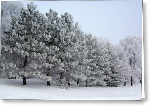 Pines In The Winter Greeting Card