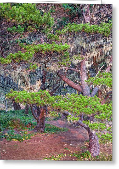 Pines With Hanging Lichens, Pacific Greeting Card