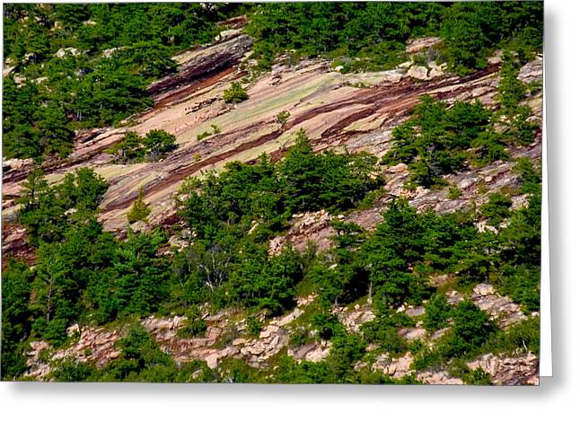 Pink Acadia 8103 Greeting Card by Brent L Ander