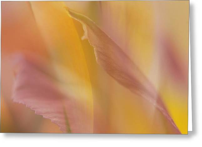 Pink Alstromeria-2 Greeting Card by Lyn  Perry