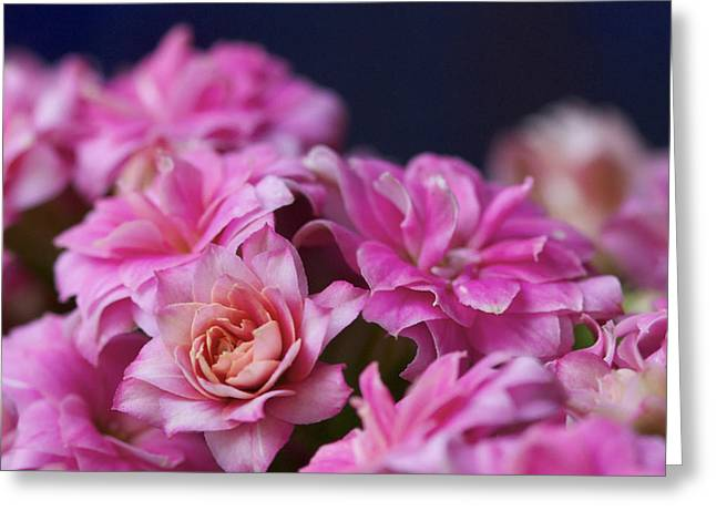 Pink And Blue II Greeting Card by Pamela Gail Torres