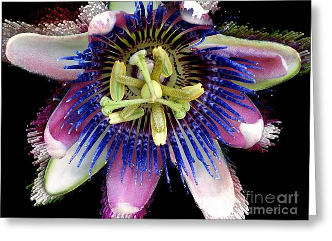 Pink And Blue Passion Flower Greeting Card