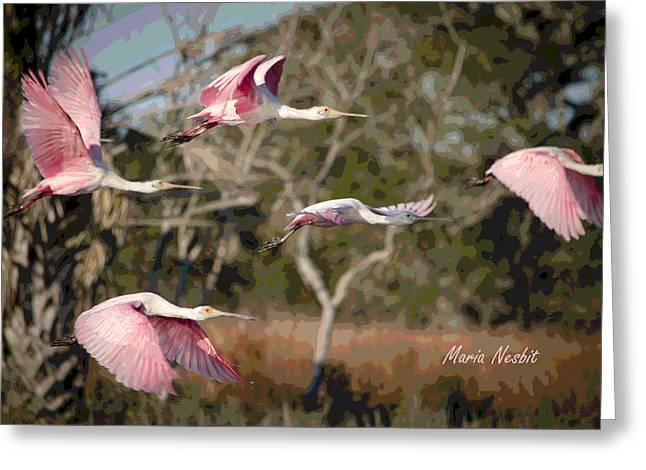 Pink And Feathers Greeting Card
