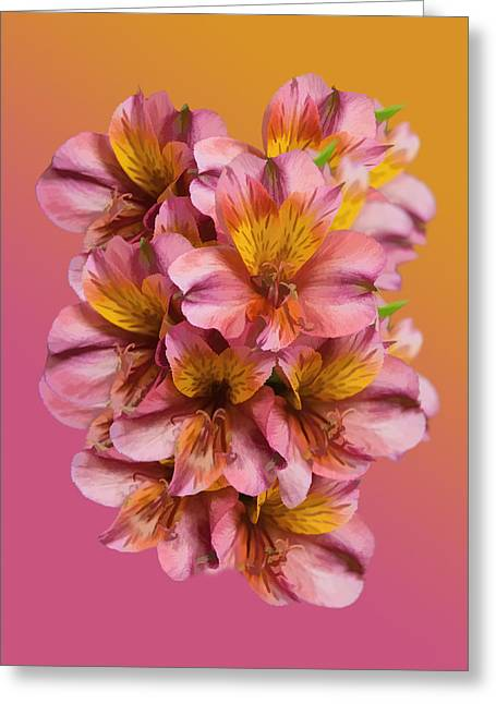 Pink And Gold Greeting Card by Delores Knowles